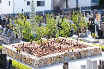 梅の木の樹木葬<夏>